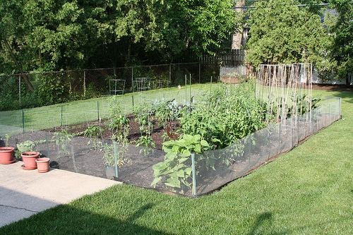 Fabulous fences diy vegetable garden fence for Garden windbreak designs