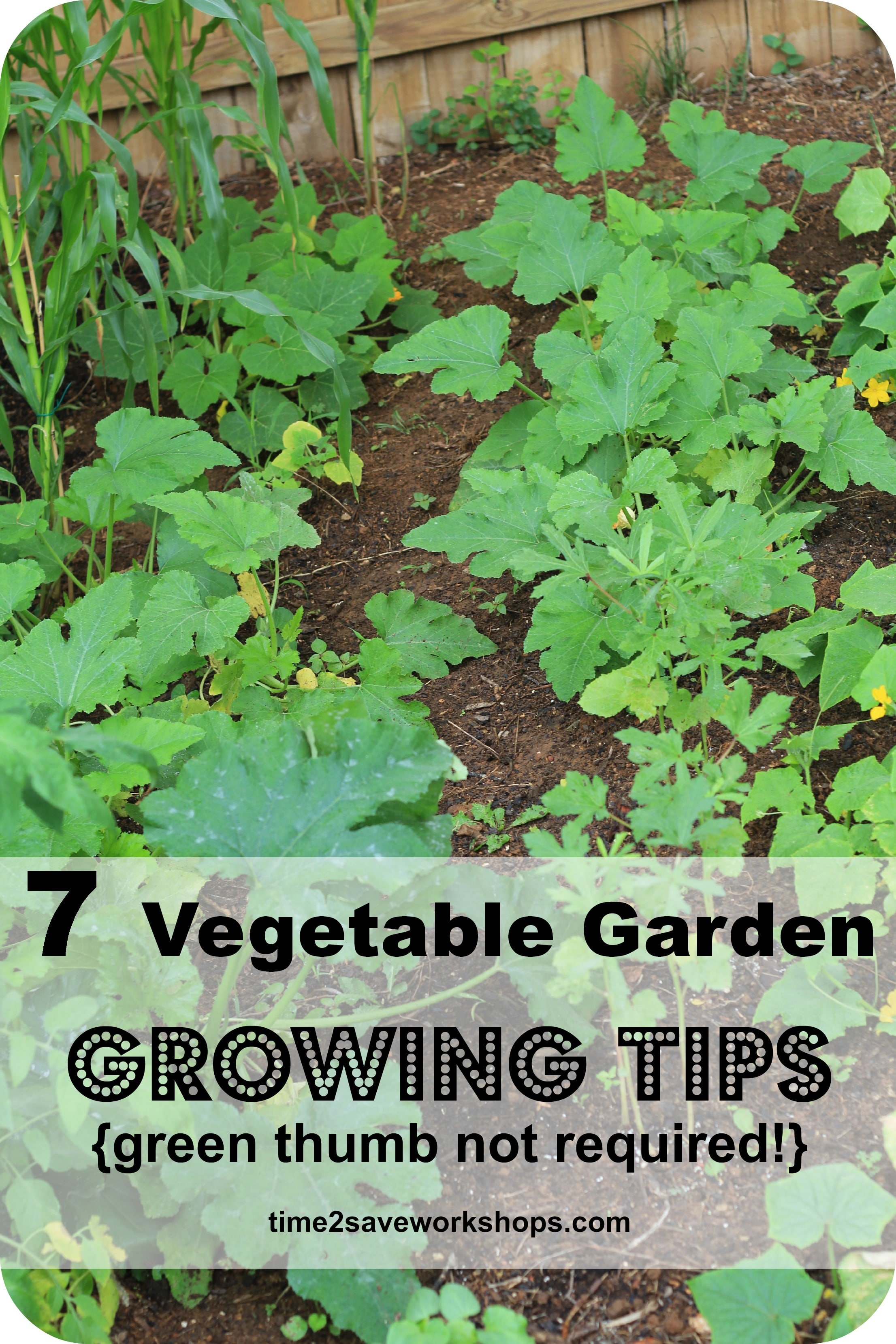 Green Up Your Thumb: Tips for a Beginning Gardener