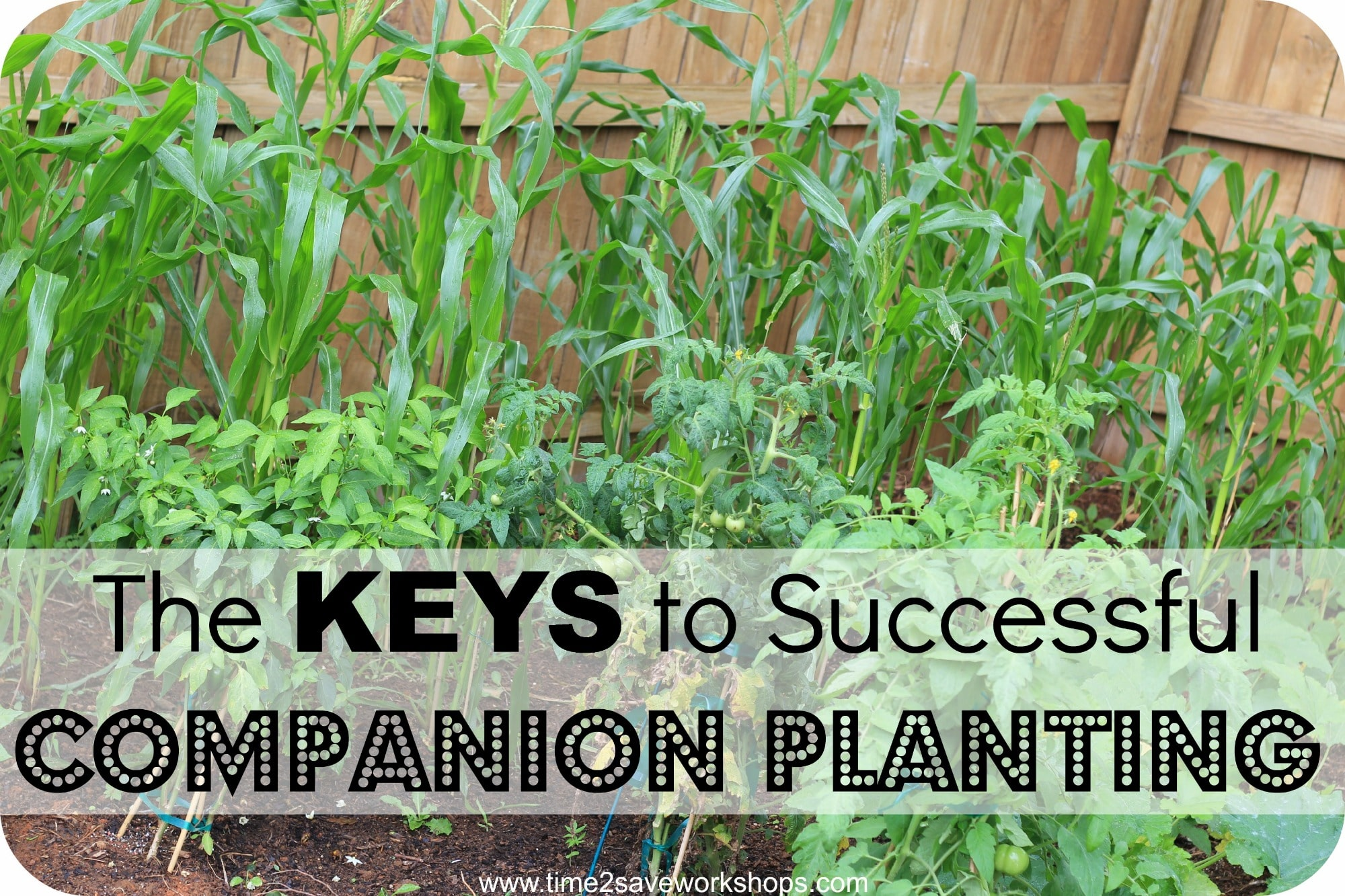 pair those plants the key to successful companion planting