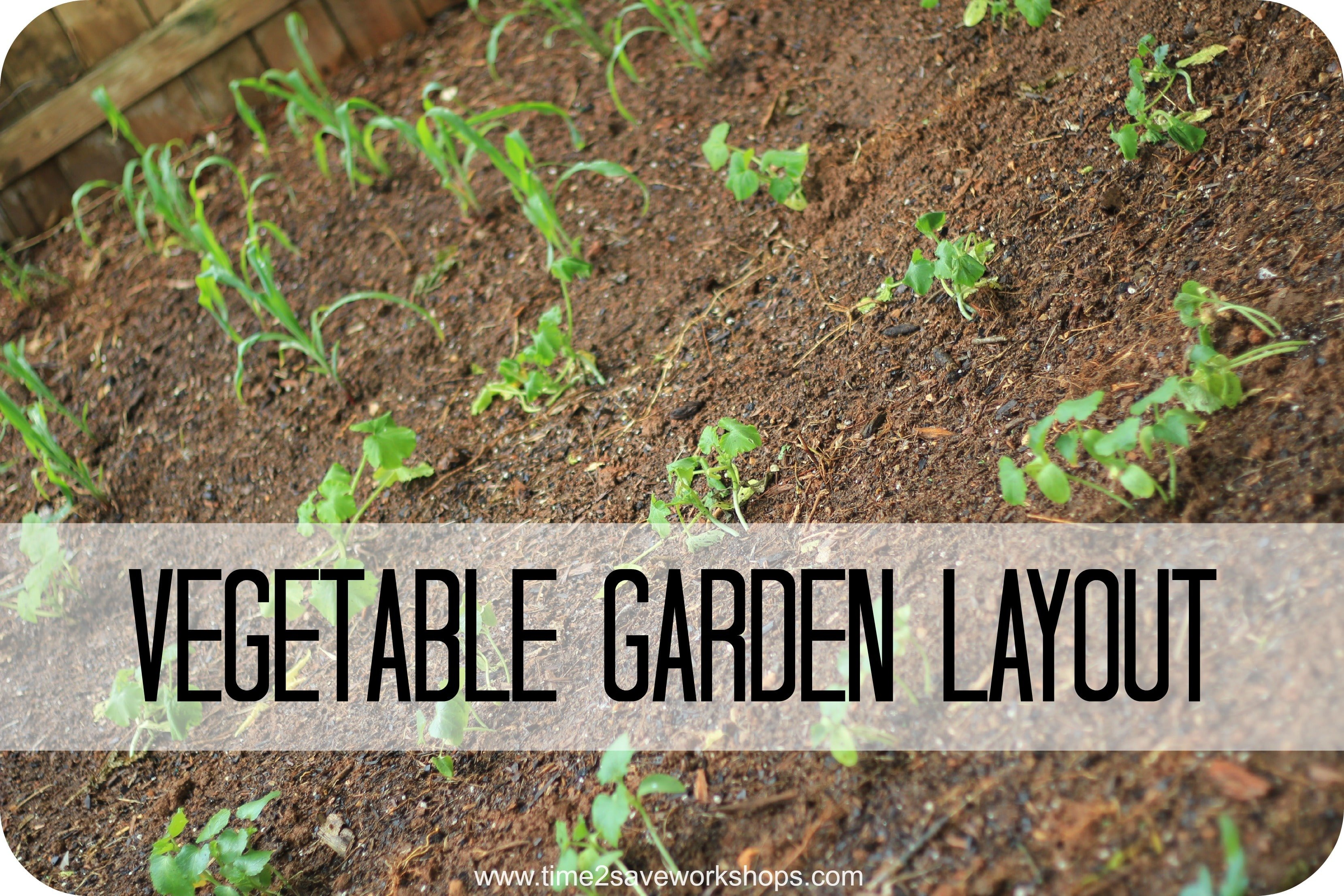Vegetable garden kasey trenum for Vegetable layout