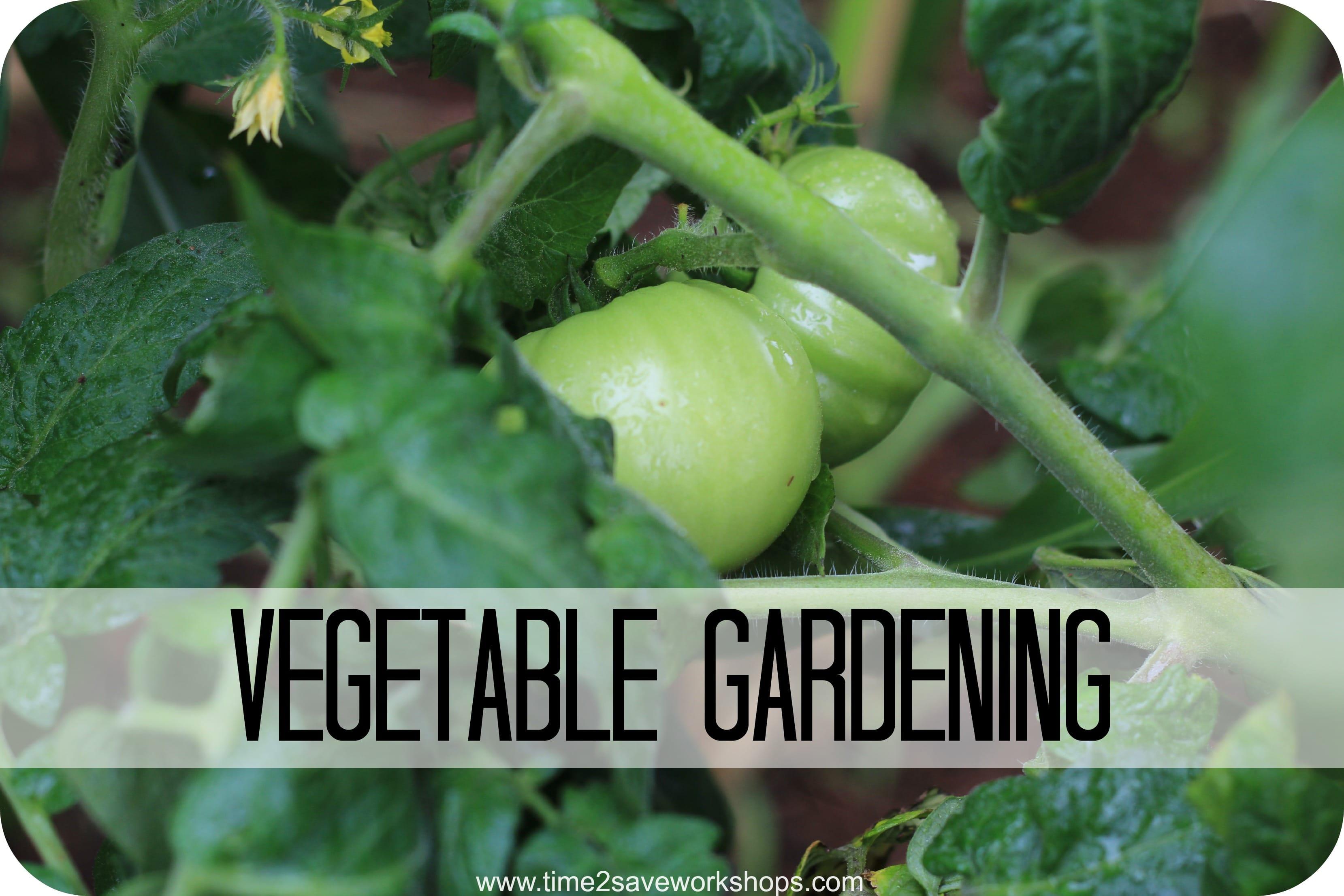 vegetable gardening (1)