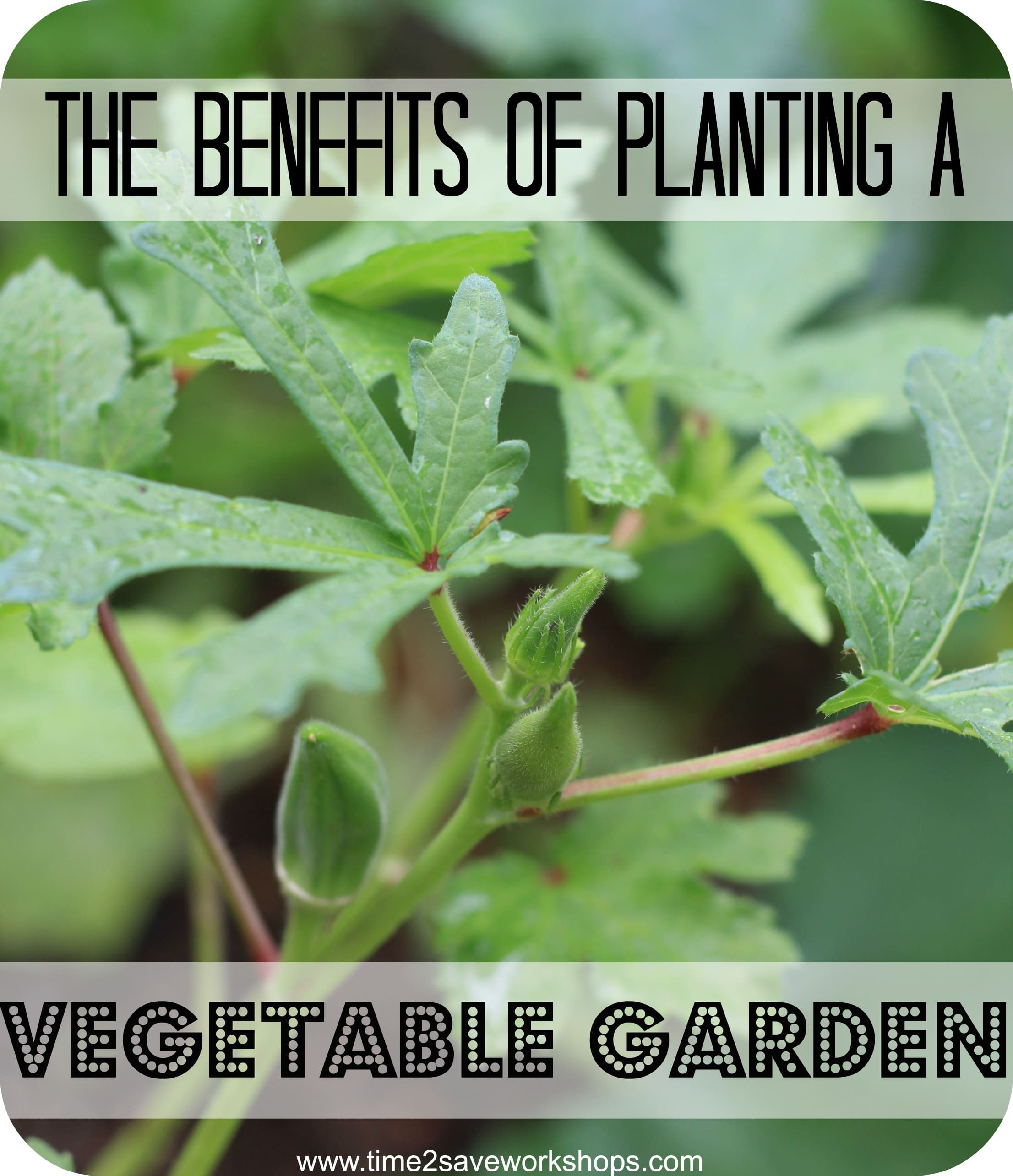 Benefits-of-planting-a-vegetable-garden1