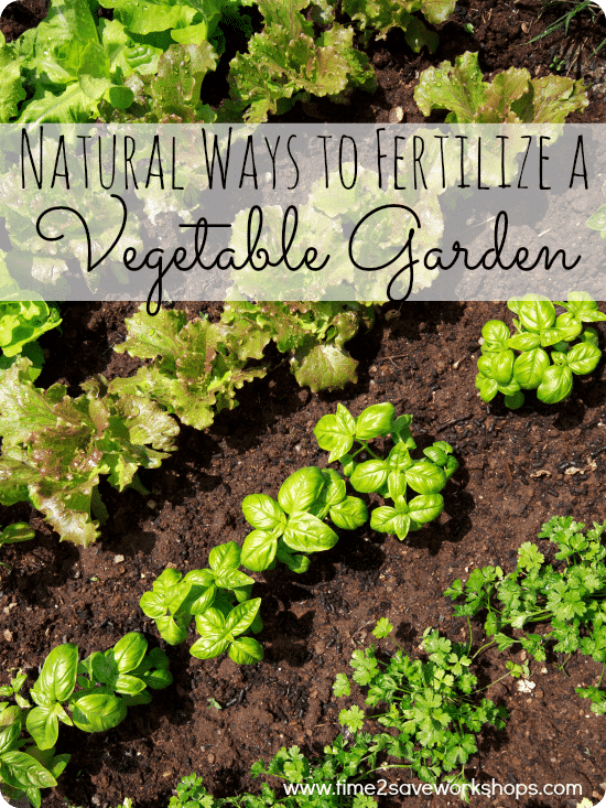 fertilize a vegetable garden