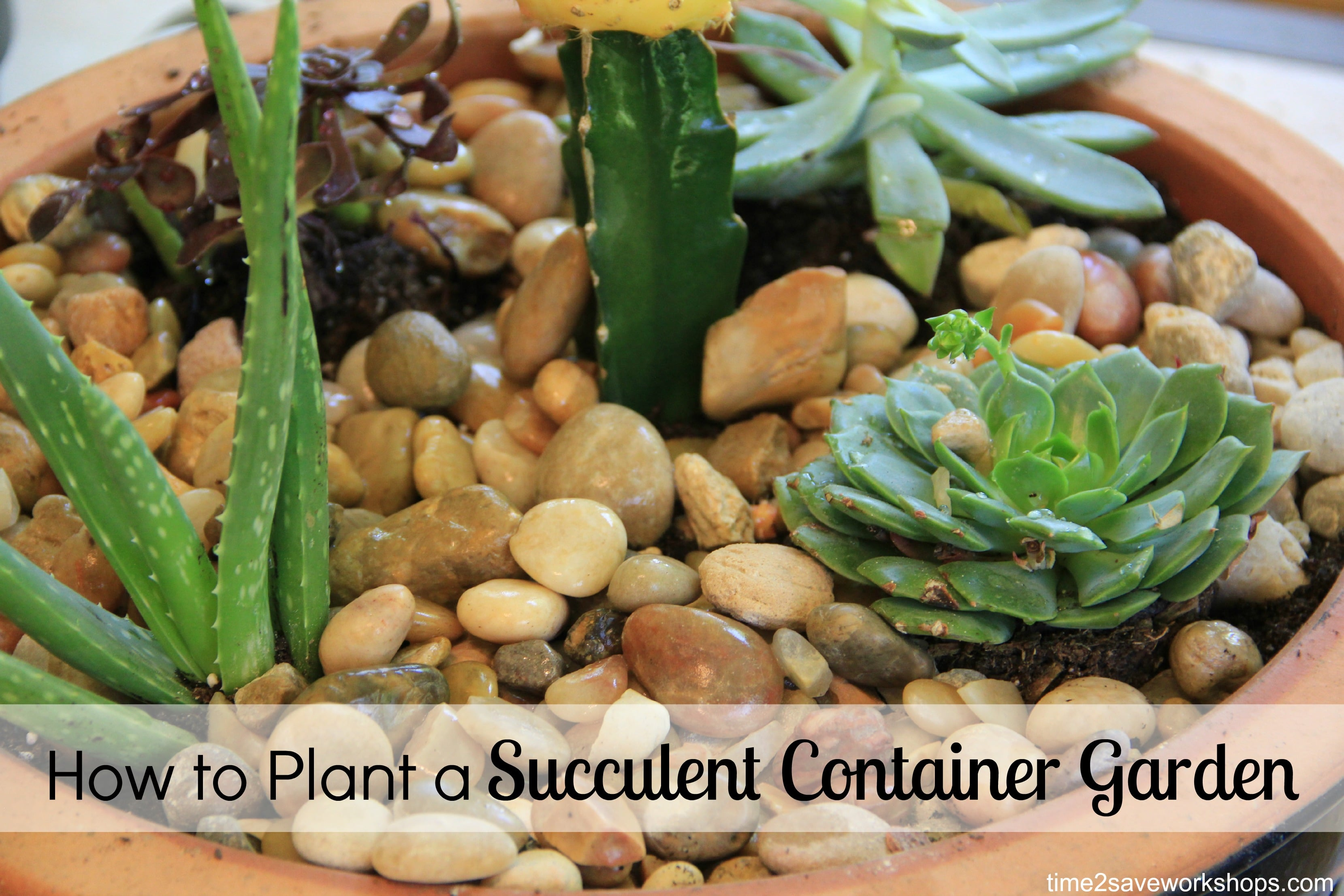 DIY How to Plant a Succulent Garden Video Tutorial Kasey Trenum
