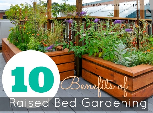Raised gardening 101 the benefits of a raised vegetable for Raised vegetable garden