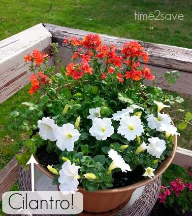 diy-flower-container