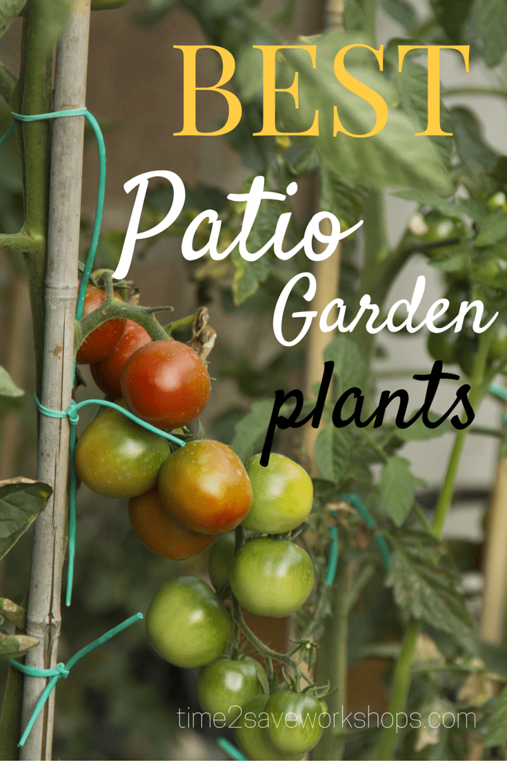 Patio Garden Plants