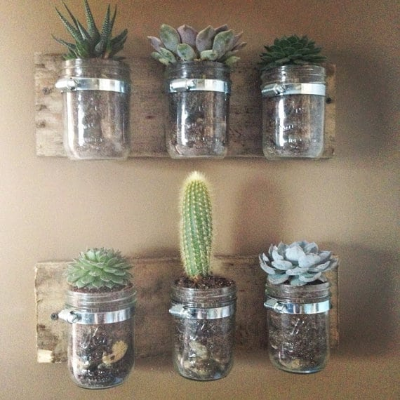 mason-jar-succulents
