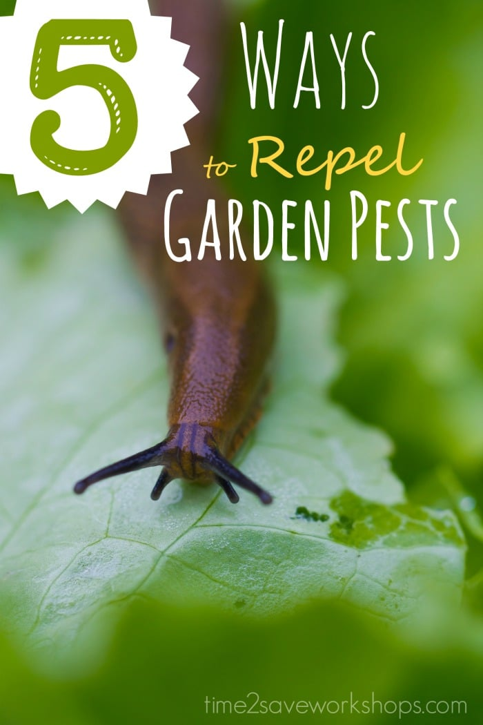 ways-to-repel-vegetable-garden-insects