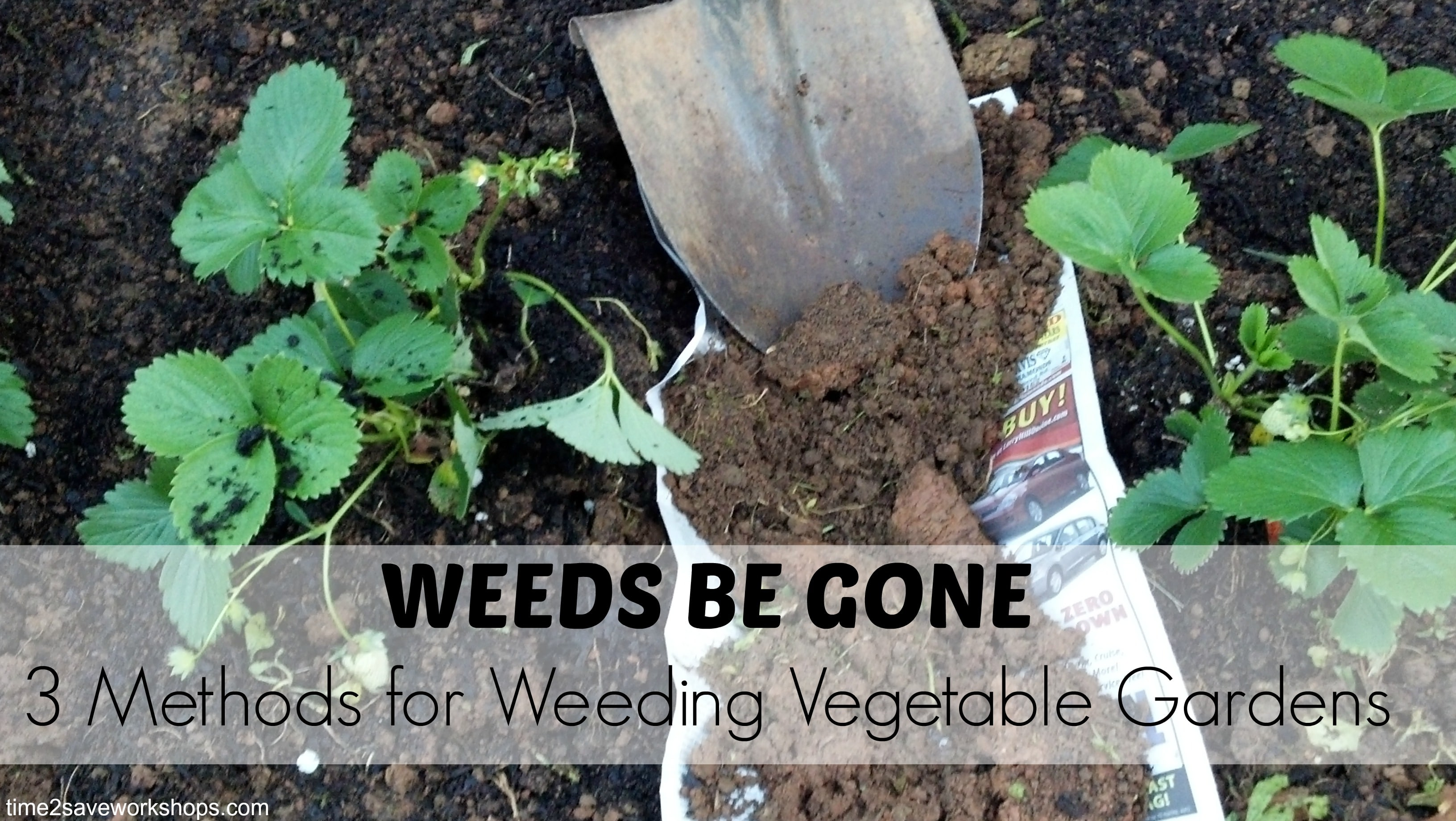 Delicieux No One Likes Weeds. They Are Unsightly And Can Cause Major Damage To Your Vegetable  Garden. How? They Act As Tiny Ropes That Strangle The Roots Of Your ...