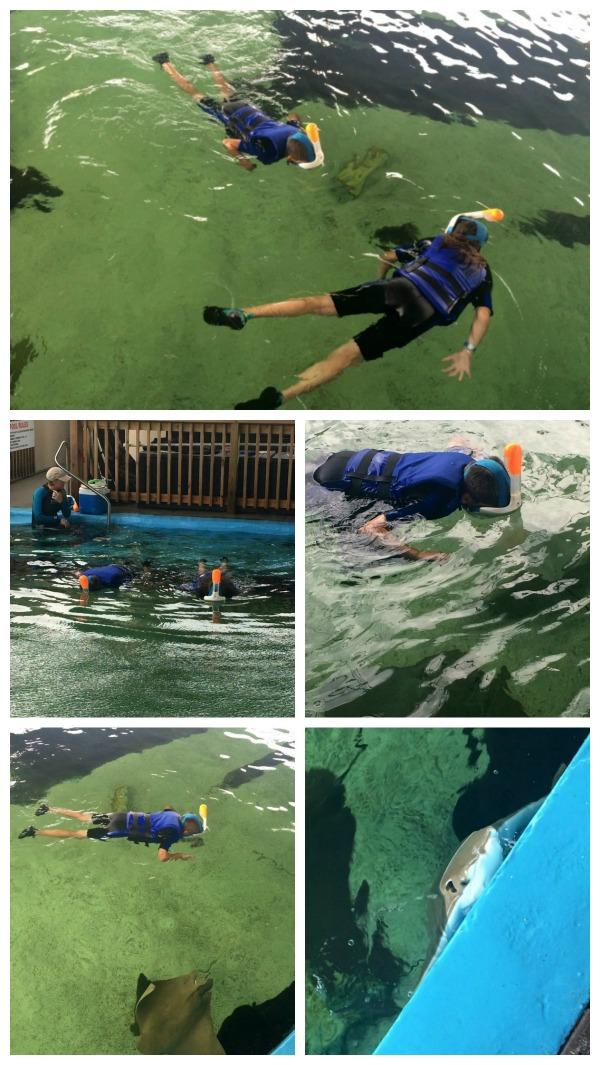 Gulfarium collage